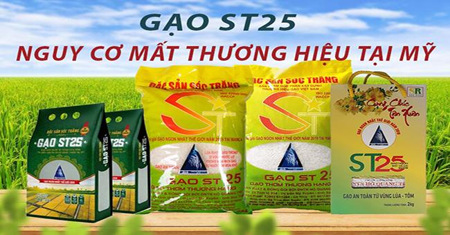 Gạo ST25 và nguy cơ mất thương hiệu tại Mỹ